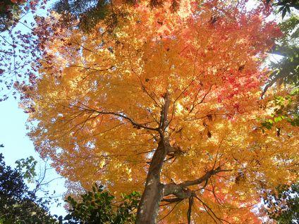浄福寺の紅葉