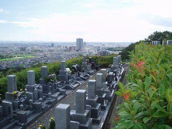 公園墓地のさくら